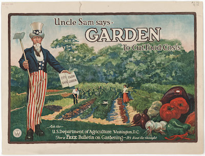 Old victory garden poster of uncle sam in a garden. Climate Victory Gardens.