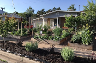 beautiful front yard full of edible plants and garden beds
