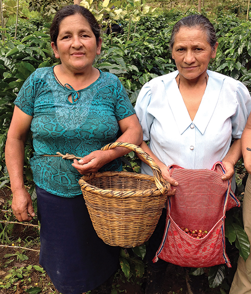 Grounds for Change and Cafe Femenino coffee growers pause to display their harvests on an organic coffee farm in the Andean foothills of Peru.