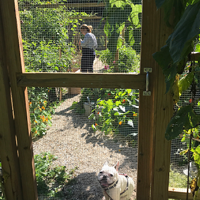 girl and dog inside fenced garden