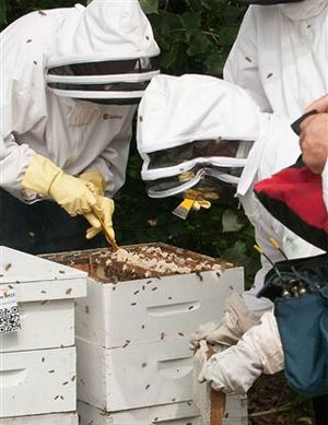 Urban Bee Farm Helps Former Inmates: Today Show Features Sweet Beginnings
