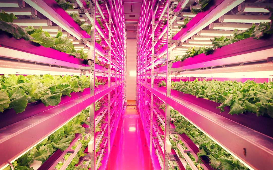 Superb LED Lights Power Up A Big Idea In Hydroponic Farming Idea