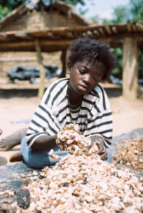 Young girl mixing cocoa beans.