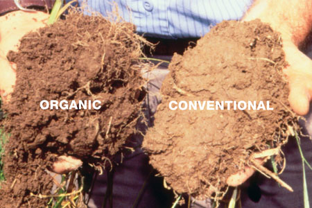 Organic farming facts: A side by side comparison of soils from different fields taken from the same location at the Rodale Institute. You can clearly see the difference in the soil that is under organic management versus conventional management (dark color = carbon and soil organic matter).