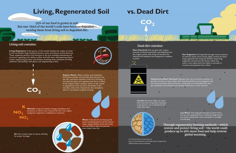 Living soil vs dead dirt green america for Soil not oil