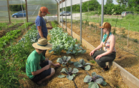 Young farmers working with vegetables on a small farm