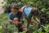 Schauder children of Permaculture Gardens