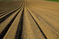 Image: field ready for planting. Industrial agriculture.