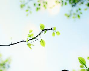 green leafy branch and a bright blue sky