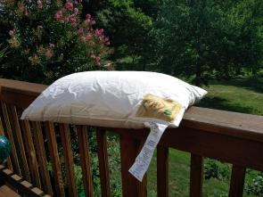 Organic Kapok pillows with cotton cover