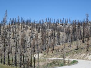 Plumas burned forest