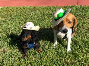 Emmett and Hobbit in their Easter Bonnets
