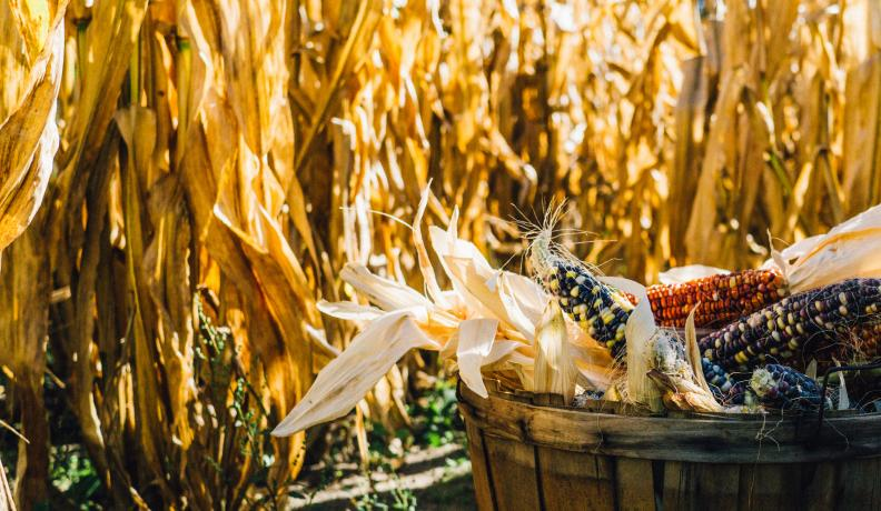 corn in a basket