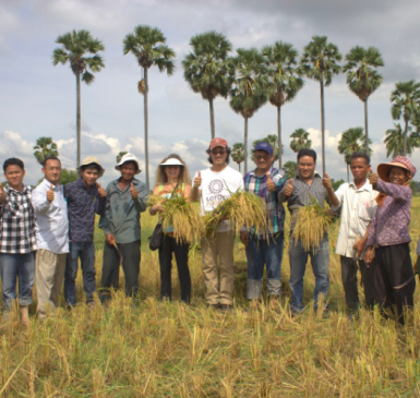 Caryl Levine and Ken Lee (center holding rice stalks) with staff from the Cambodian Center for Study and Development in Agriculture staff and SRI farmers