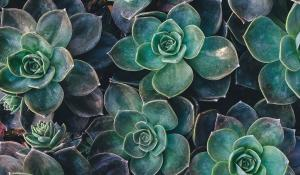 Succulents by Annie Sprat