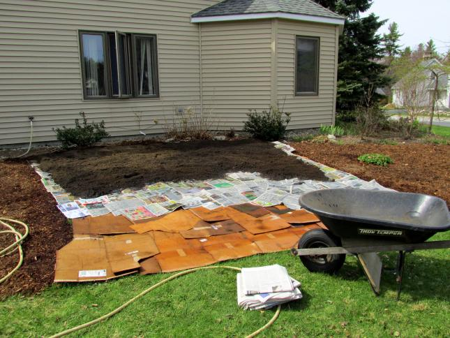 lawn being transformed into a climate victory garden with layers of cardboard and newspaper