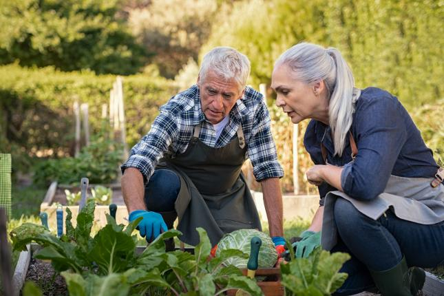 man helping woman in garden, find local help for your climate victory garden