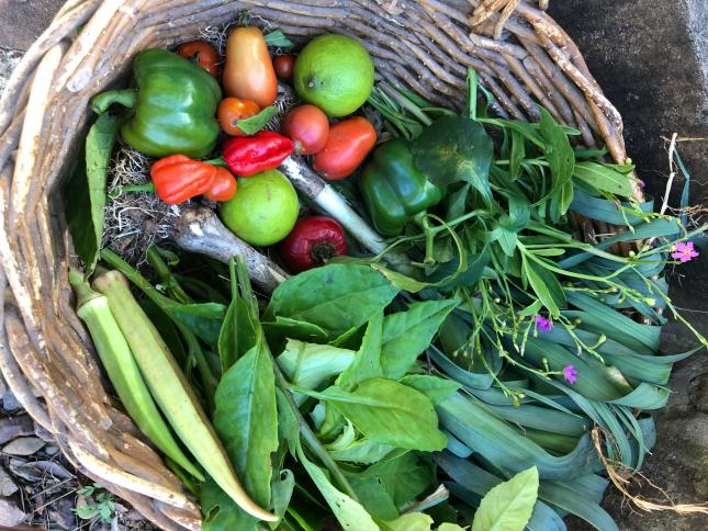 basket of fresh picked herbs and vegetables, showing what to grow in climate victory garden