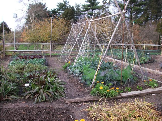 Climate Victory Garden with raised beds and trellis to show garden size and layout