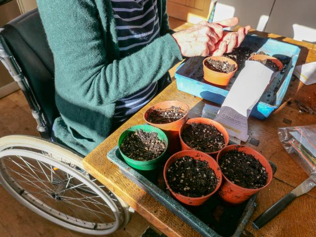 woman planting seeds in pots filled with dirt on a table, choosing seeds vs transplants for her climate victory garden