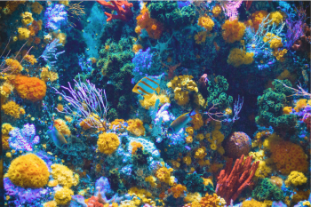 Colorful coral and fish underwater
